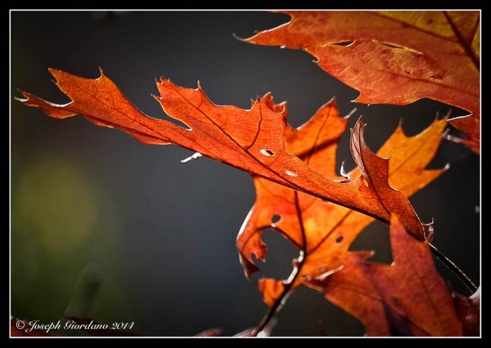 AutumnFive