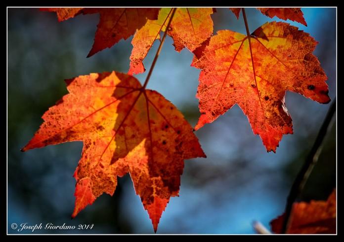 AutumnFour