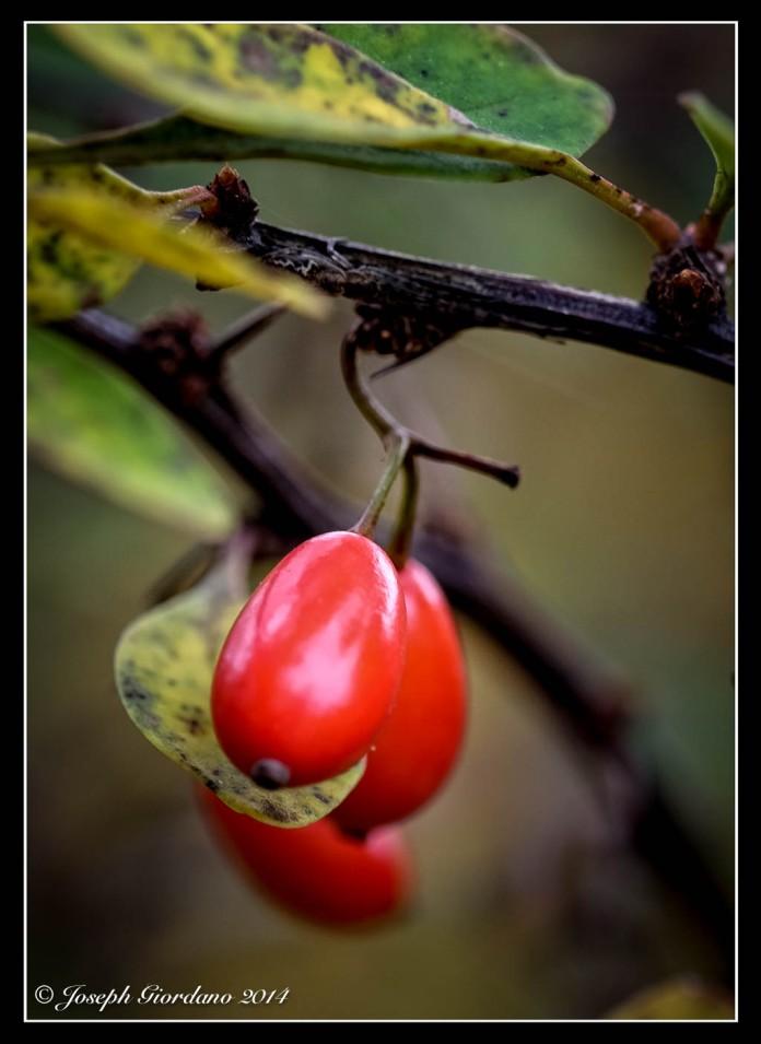 BerryPortrait