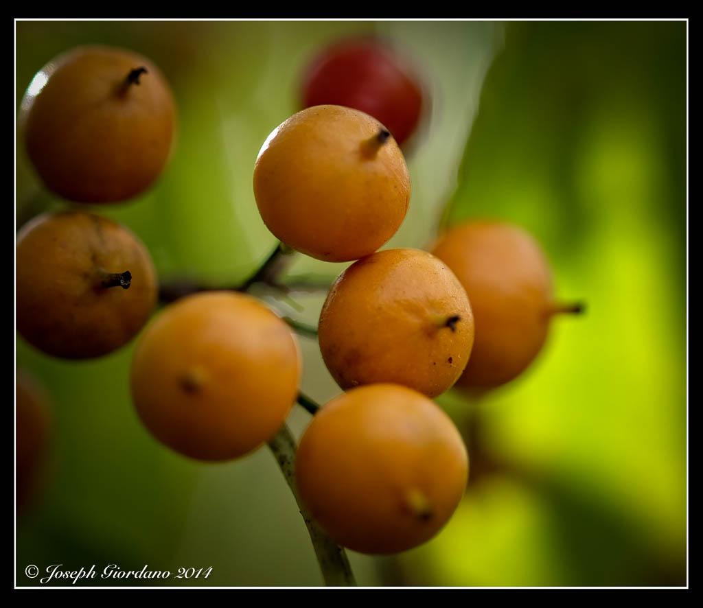 BokehBerries