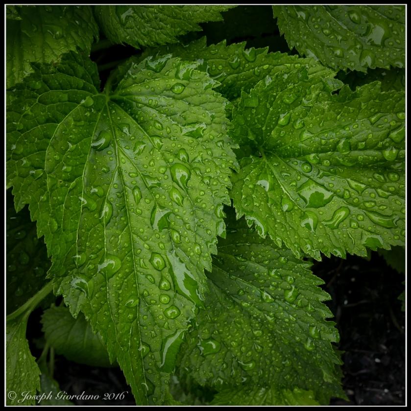 RainDrops-Color