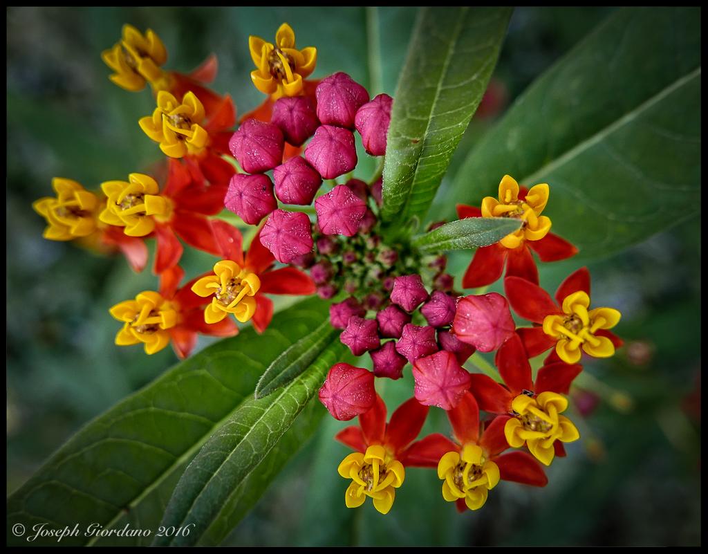 FlowerMulti