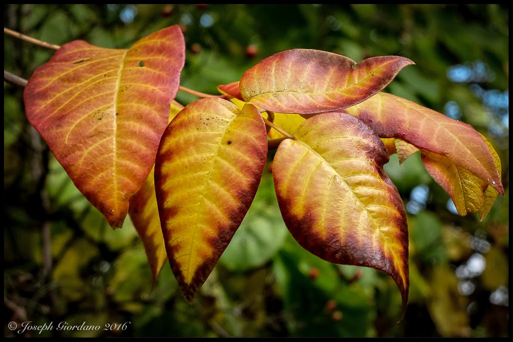 leavescover-b